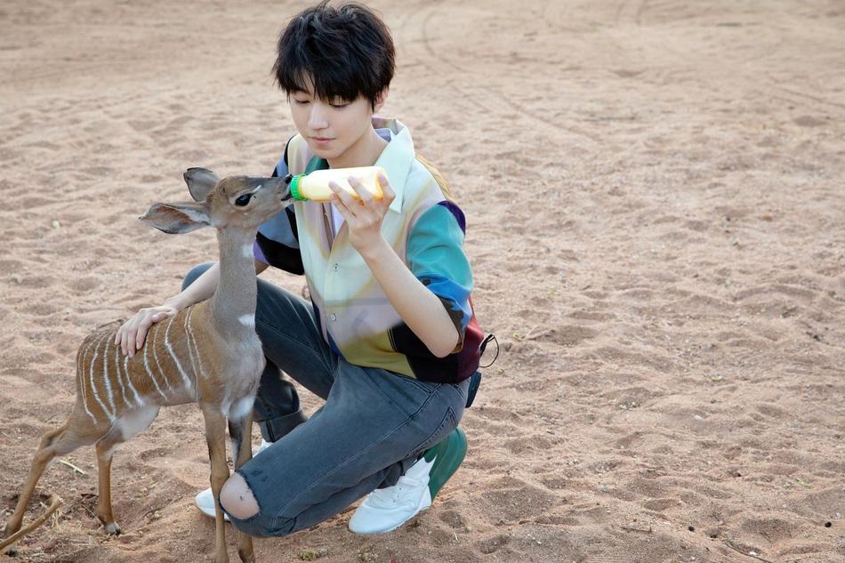 照片中王俊凯清爽帅气,和小动物互动温柔满分,少年感十足.
