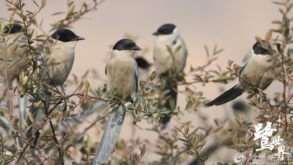 《鹭世界》首曝预告 苍鹭携群鸟首现黄河生存图鉴